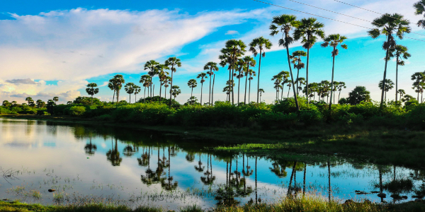 sri lanka tour packages from ahmedabad