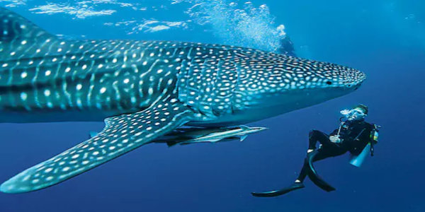 Maldives tour packages from Ahmedabad