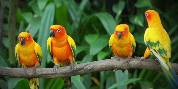 Things to Do in Karnala Bird Sanctuary