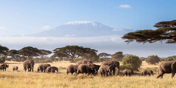 Kenya Holidays